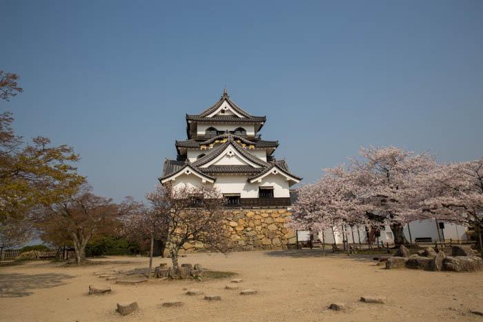 sakura_hikone_chateau_7V0B7738_10042014