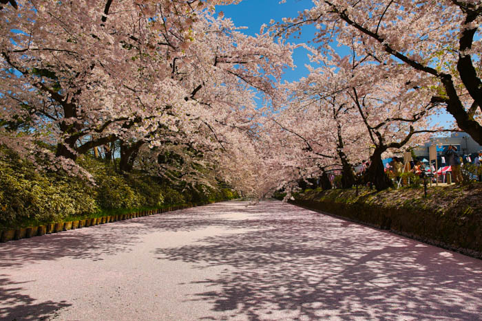 Sakura_article_hirosaki2--selection_exposure_29042014_7V0B5027