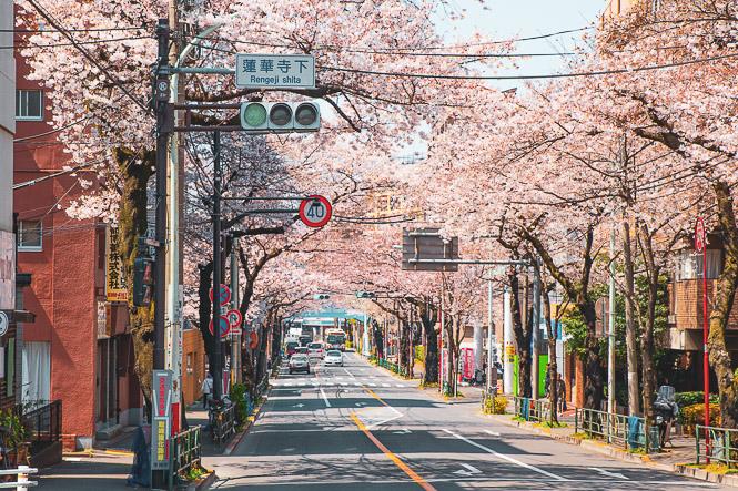 A Propos de la Balade du Sakura