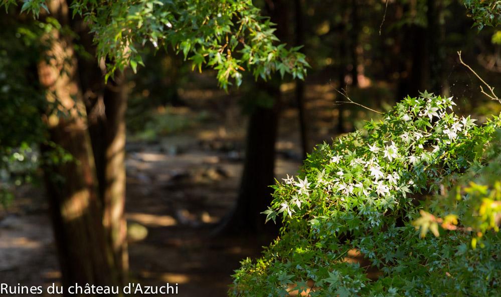 ruines_azuchi-bds-japon-8