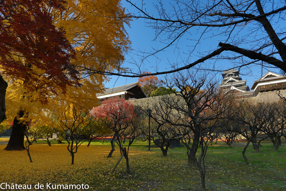 chateau_kumamoto_japon-kumamoto-40