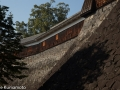 chateau_kumamoto_japon-kumamoto-32