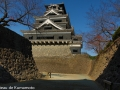 chateau_kumamoto_japon-kumamoto-35