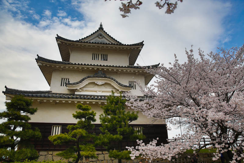 sakura_selection_article02042014-7v0b3602