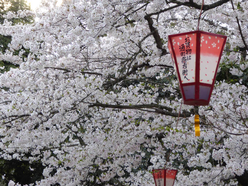 sakura_selection_article02042014-p1010564