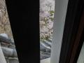 sakura_02042014-p1010510