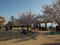 sakura_matsuyama_01042014-7v0b3519