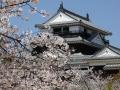 sakura_matsuyama_01042014-p1010205