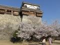 sakura_matsuyama_01042014-p1010358
