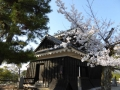sakura_matsuyama_01042014-p1010360