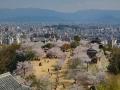 sakura_matsuyama_article_web_matsuyama01042014-7v0b3435