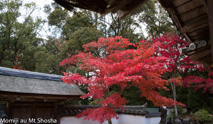 article14_japon-momiji-mt-shosha-10