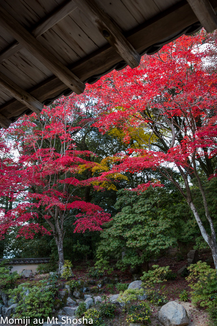 article14_japon-momiji-mt-shosha-11