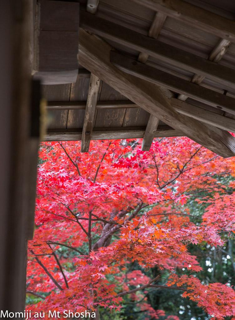 article14_japon-momiji-mt-shosha-12