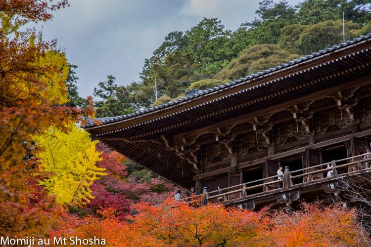 article14_japon-momiji-mt-shosha-13