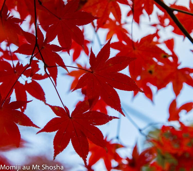 article14_japon-momiji-mt-shosha-14