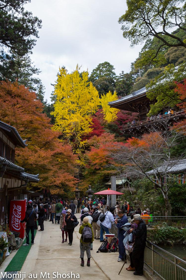 article14_japon-momiji-mt-shosha-15