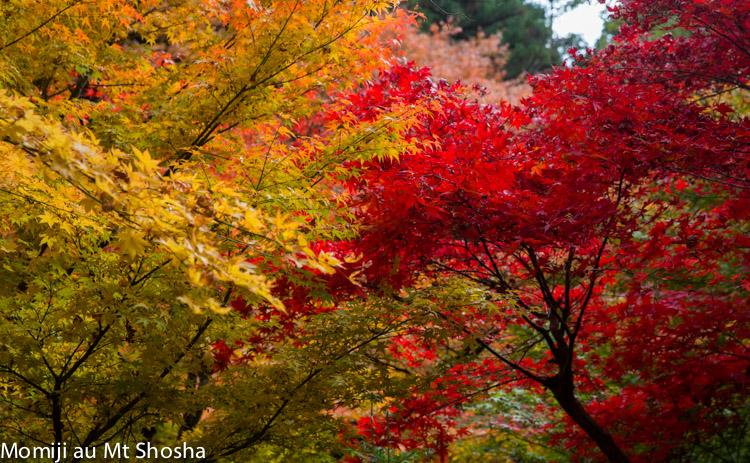 article14_japon-momiji-mt-shosha-16