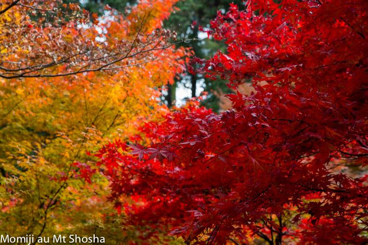 article14_japon-momiji-mt-shosha-17