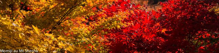 article14_japon-momiji-mt-shosha-18
