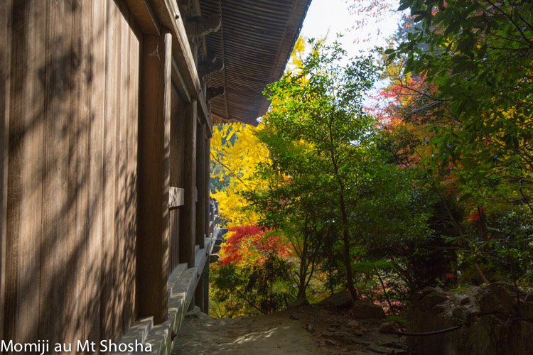 article14_japon-momiji-mt-shosha-21