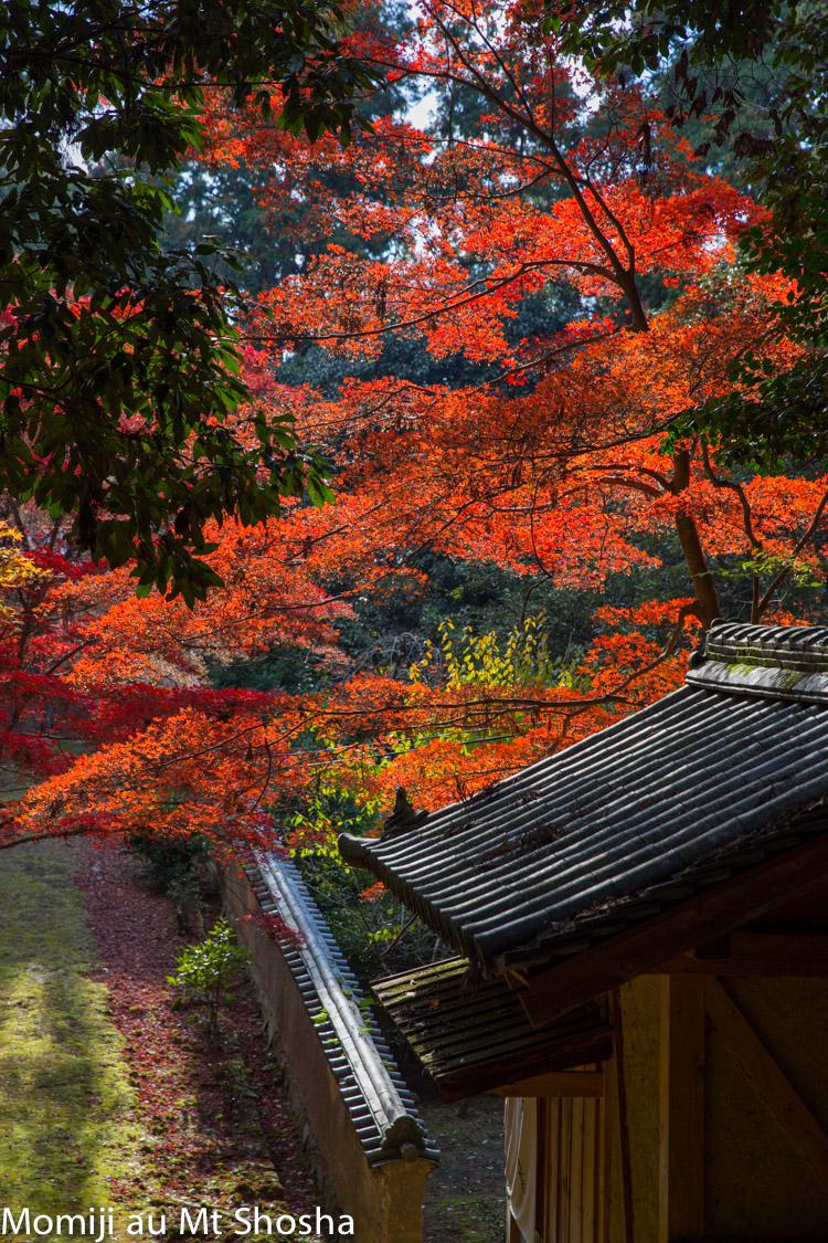 article14_japon-momiji-mt-shosha-22