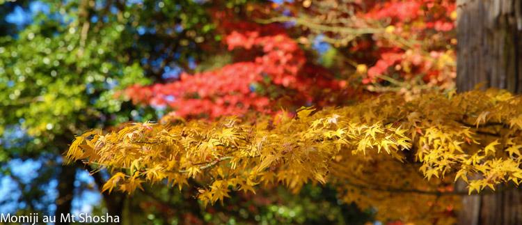 article14_japon-momiji-mt-shosha-29