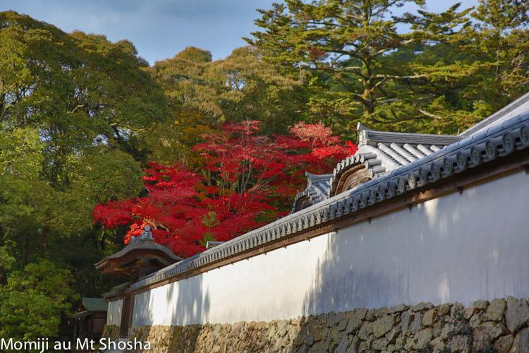 article14_japon-momiji-mt-shosha-31