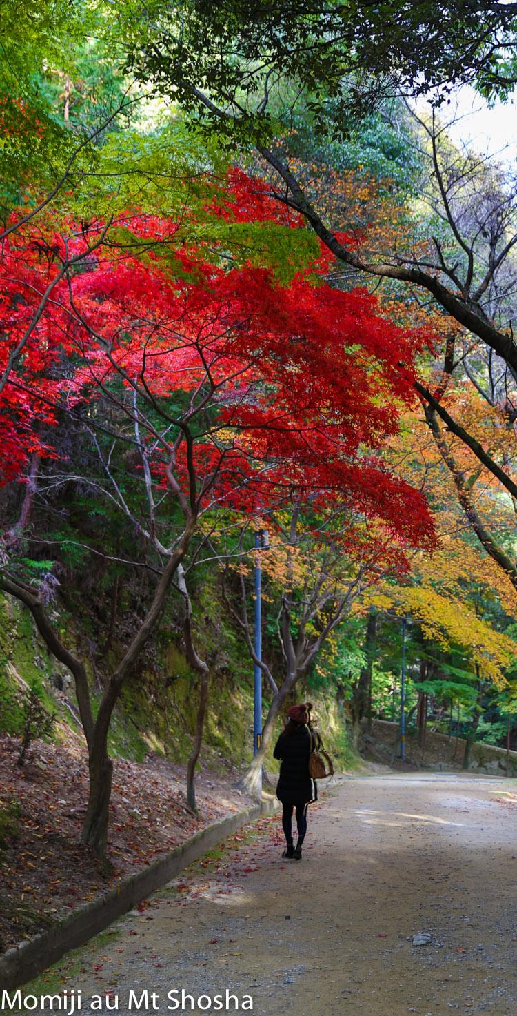 article14_japon-momiji-mt-shosha-33