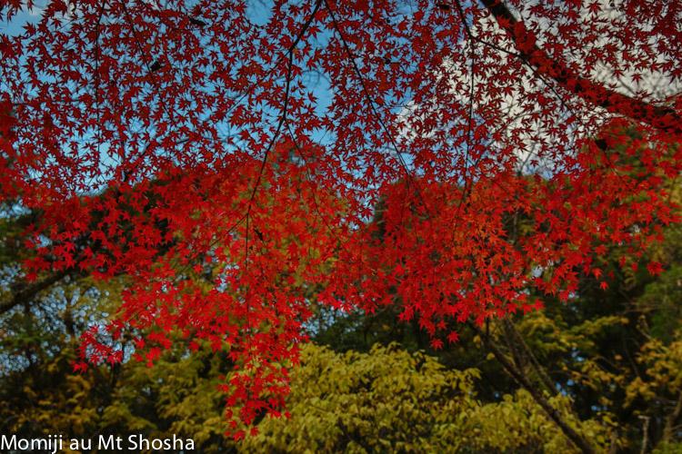 article14_japon-momiji-mt-shosha-35