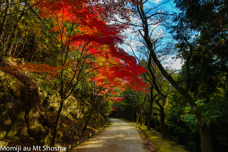 article14_japon-momiji-mt-shosha-36