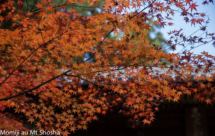 article14_japon-momiji-mt-shosha-4