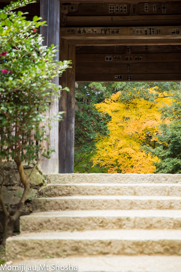 article14_japon-momiji-mt-shosha-5