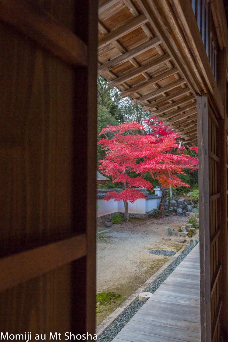article14_japon-momiji-mt-shosha-9