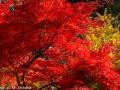 article14_japon-momiji-mt-shosha-19