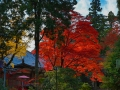 article14_japon-momiji-mt-shosha-26