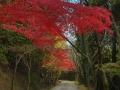 article14_japon-momiji-mt-shosha-34