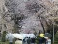 nijo_kyoto-24