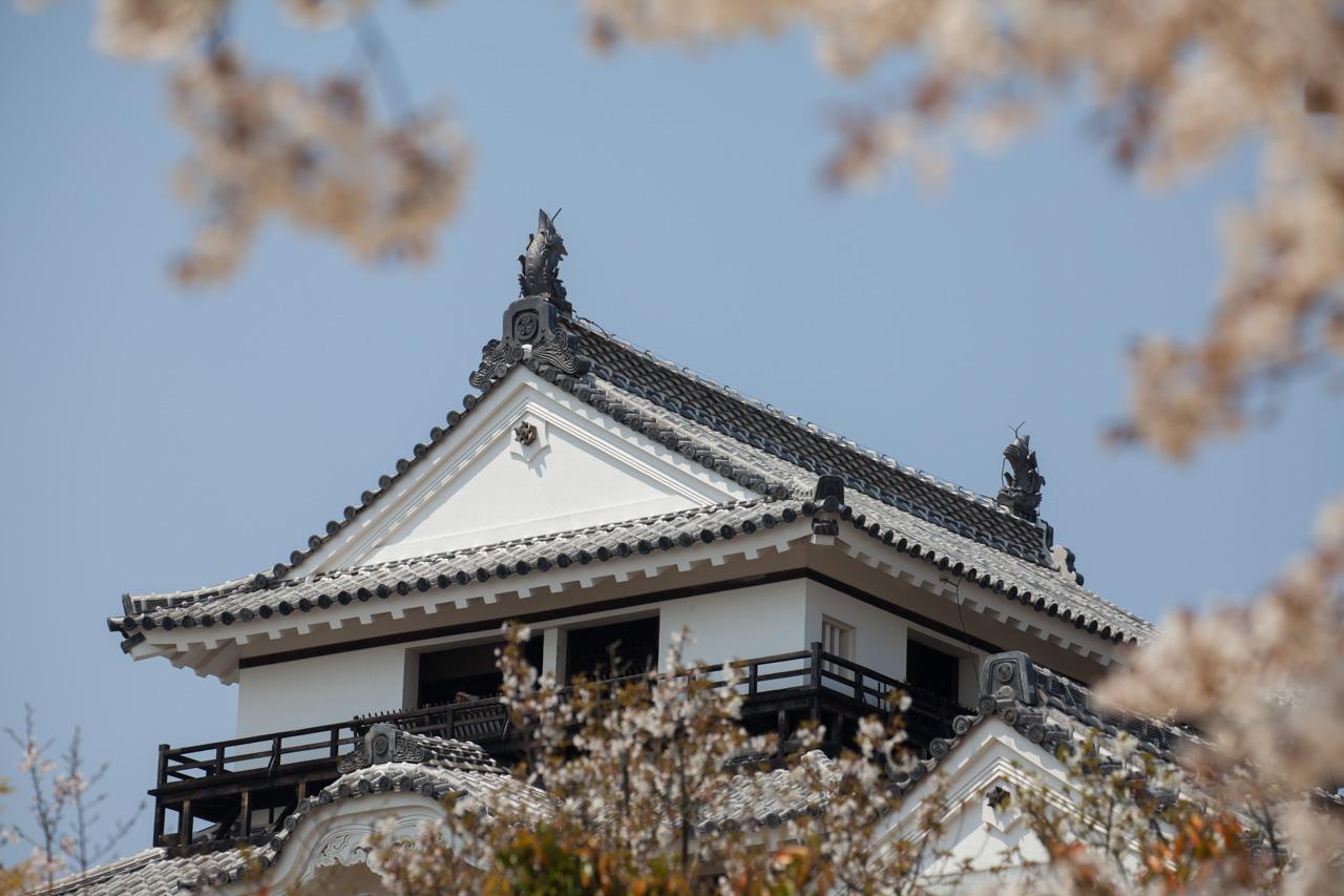 japon-matsuyama-shachihoko