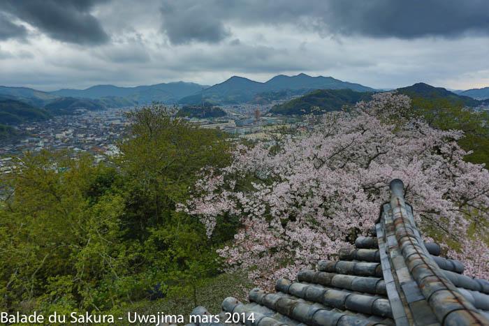 sakura_uwajima30032014-7V0B1701