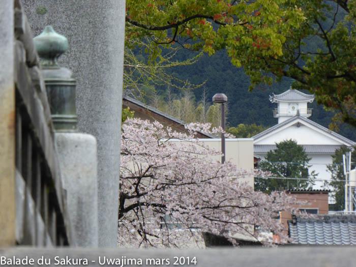 sakura_uwajima30032014-P1000763