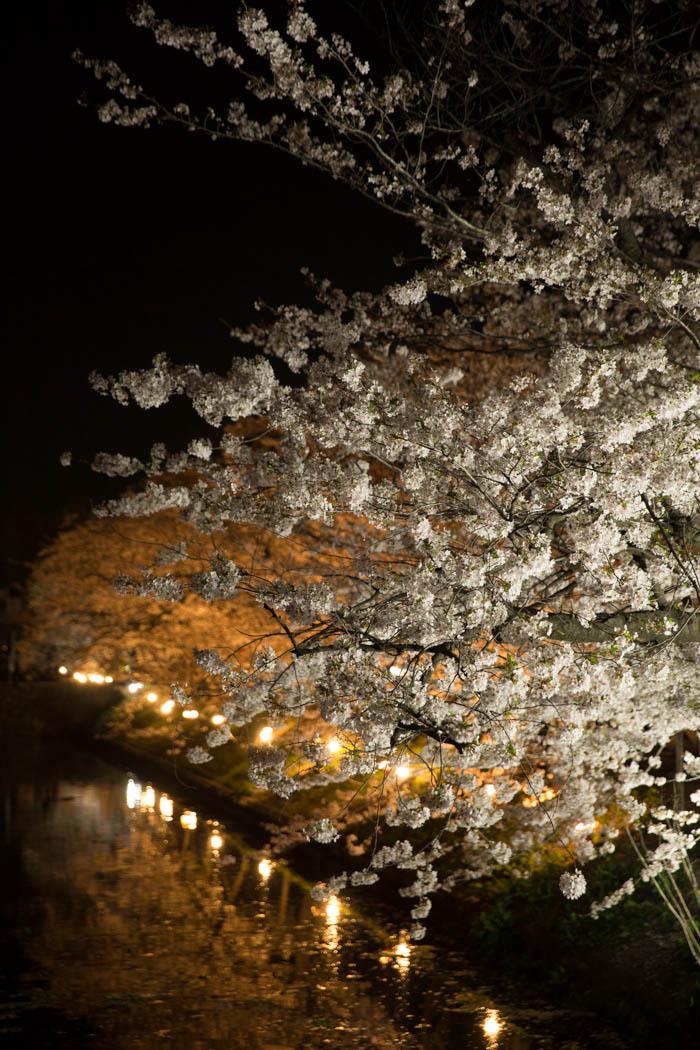 Sakura_article_himejimatsumoto_17042014_7V0B0096