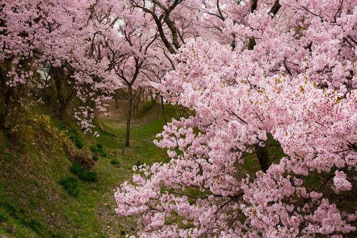 Sakura_article_takato_20042014_7V0B2273
