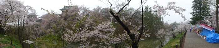Sakura_article_ueda_18042014_P1030643