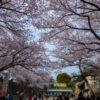 Photos du château de Nagoya
