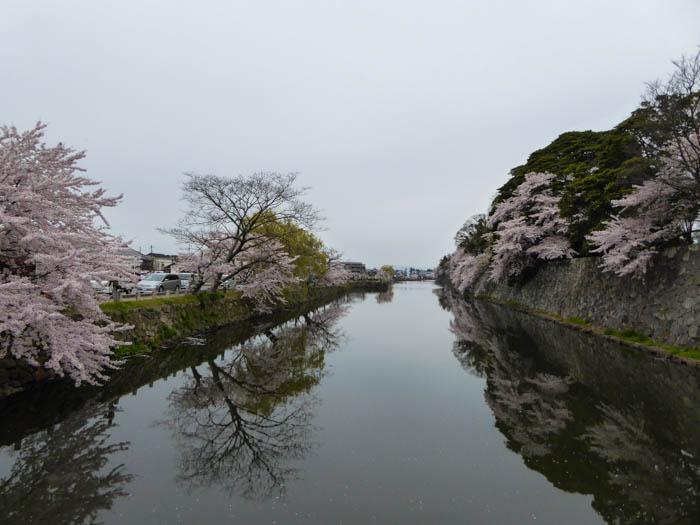 sakura_hikone3_13042014-P1030005