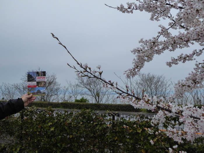 sakura_hikone3_13042014-P1030023