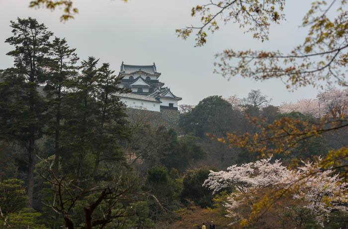 sakura_hikone_chateau_7V0B7960_10042014