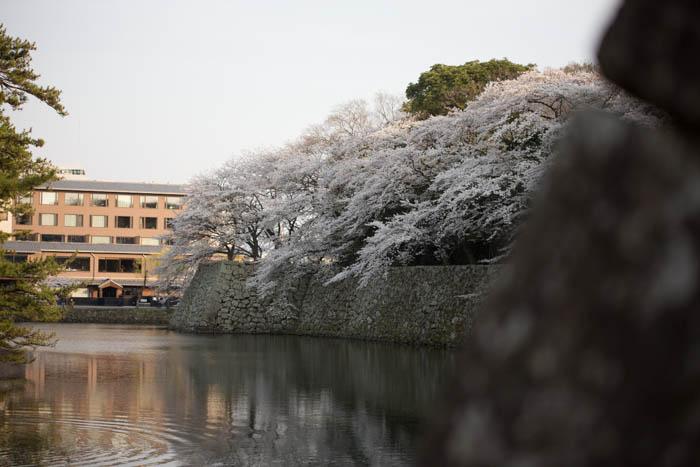 sakura_hikone_jour1_7V0B7597_09042014