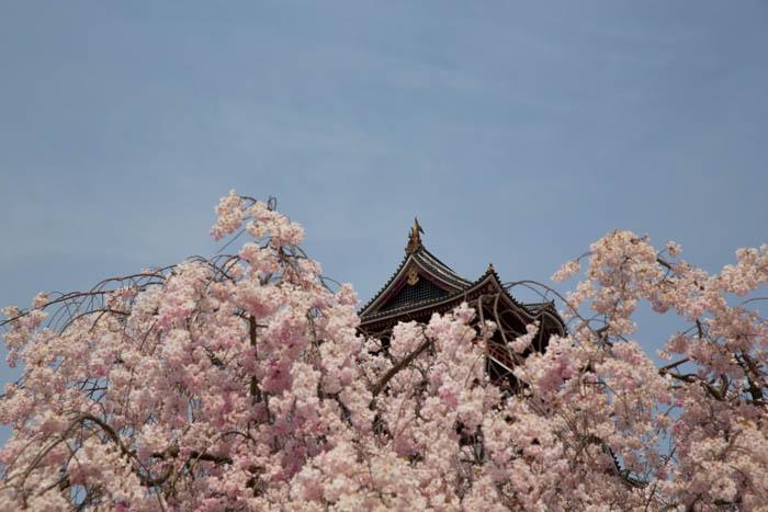 sakura_kyoto_12042014-7V0B8158